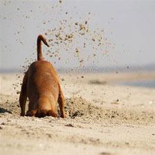 Diggingdogjpg