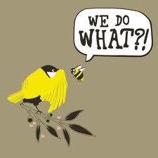 Bird_Bee